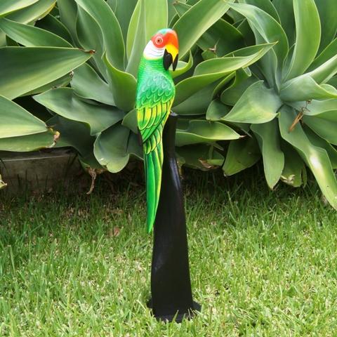 Parrot 60cm