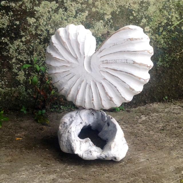 shell on driftwood